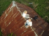 kite-aerial-photography-7