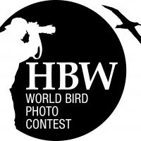 10.000 $ Ödüllü Fotoğraf Yarışması