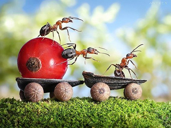 Karıncaların İnanılmaz Güzellikteki Fotoğrafları