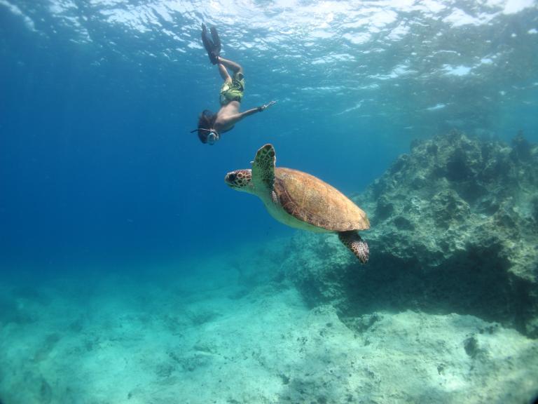 Denizlerin Umudu Su Altı Fotoğraf Yarışması Sona Erdi