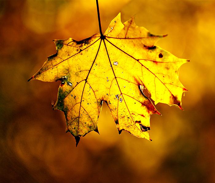 Nikon Kameralar ile Çekilmiş Birbirinden Güzel Sonbahar Fotoğrafları [Autumn-Fall]