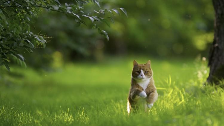 Nikon Kameralar ile Çekilmiş Birbirinden Güzel Kedi Fotoğrafları [Cats]