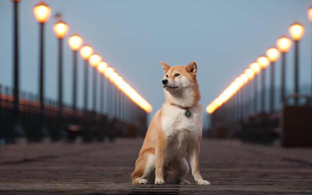 Nikon Kameralar ile Çekilmiş Birbirinden Güzel Köpek Fotoğrafları [Dogs]