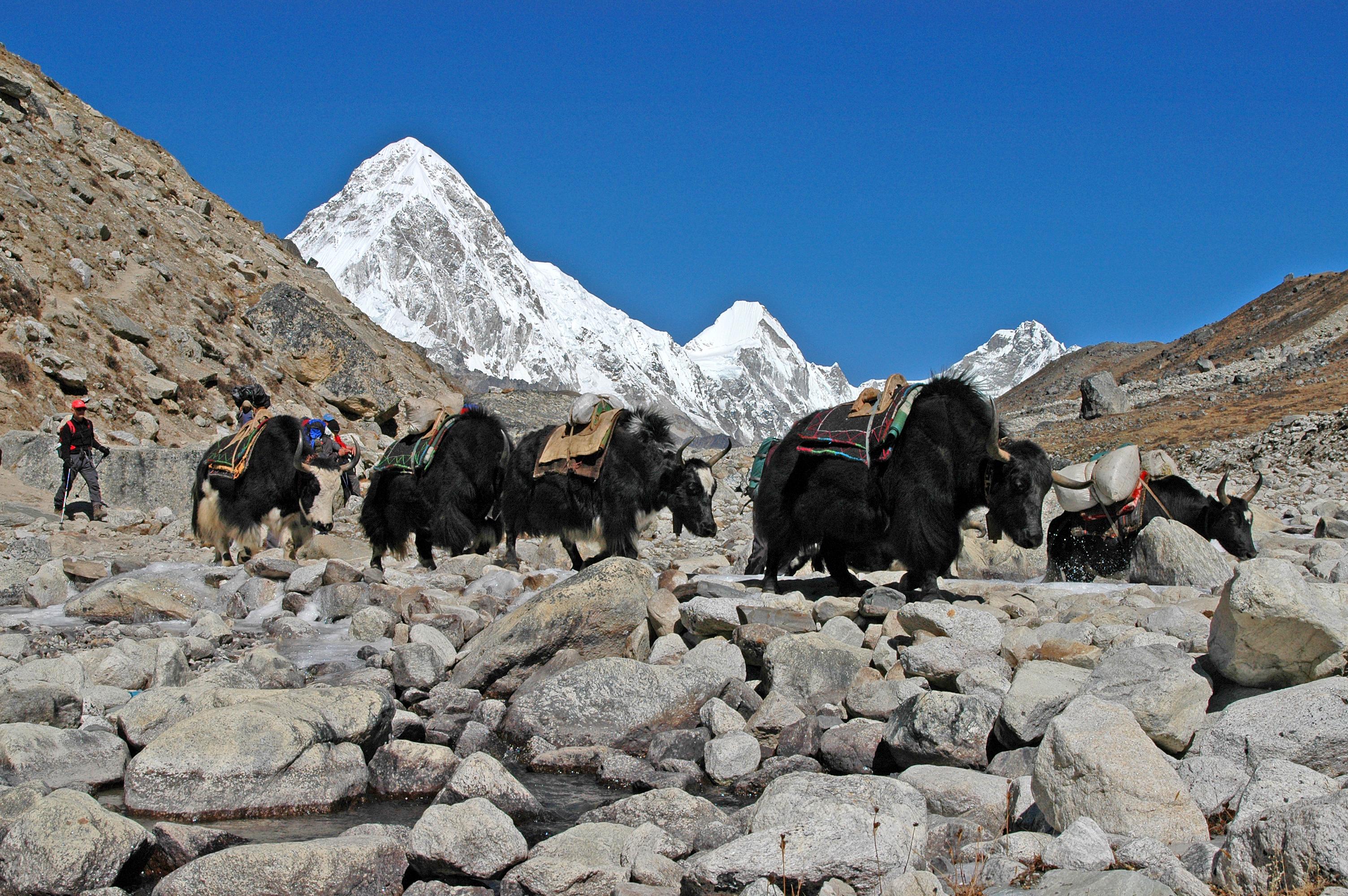 gezi-nepal-DSC_0342