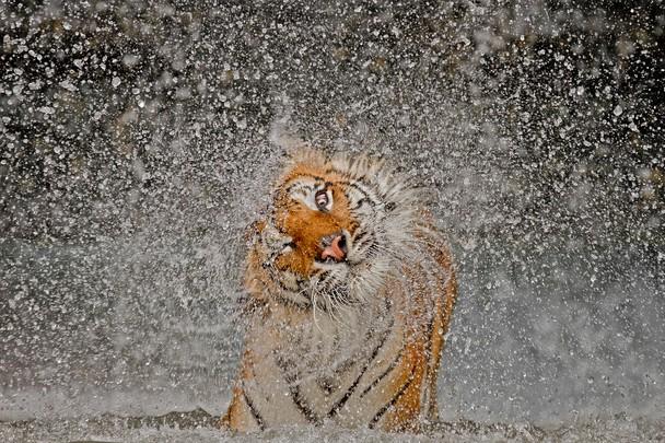 2012 National Geographic Fotoğraf Yarışması Sonuçlandı [National Geographic 2012 Photo Contest Winners]