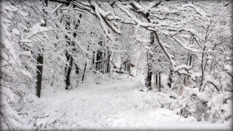 Nikon Kameralar ile Çekilmiş Birbirinden Güzel Kar Fotoğrafları [Snow]