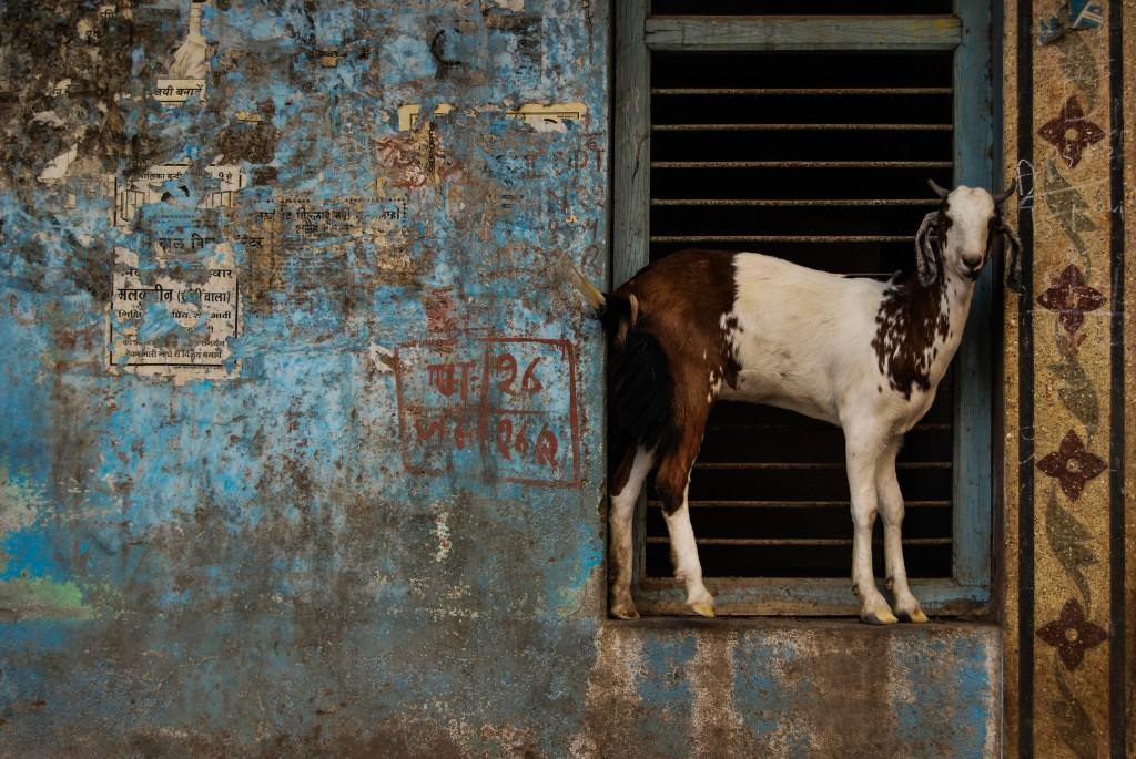 gezi-fotografciligi-svetlana-hindistan-04