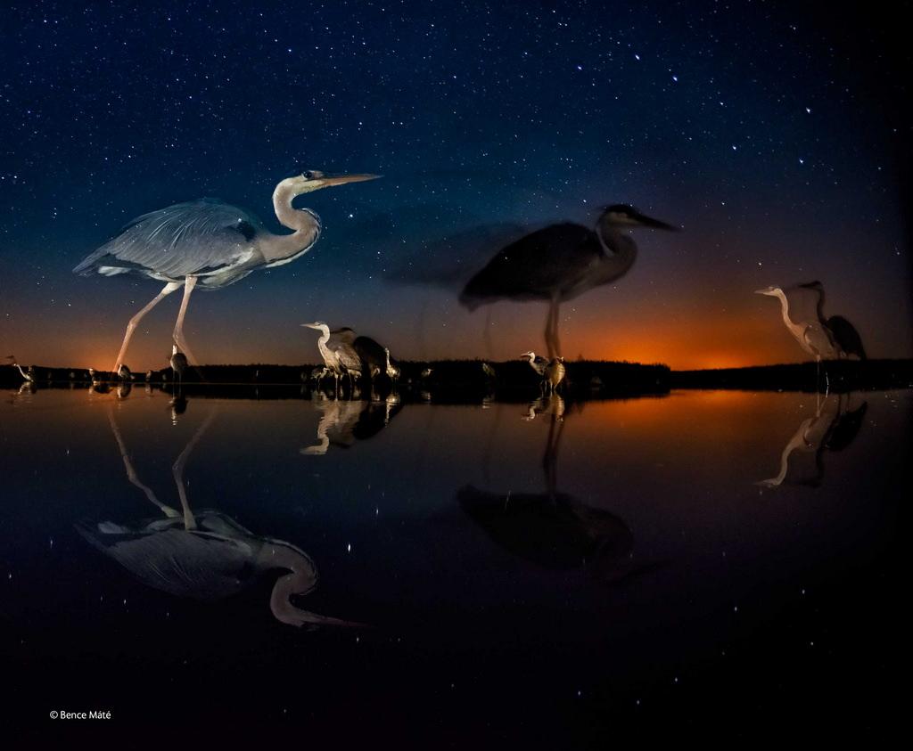 bence-mate-wildlife-photographer-2014