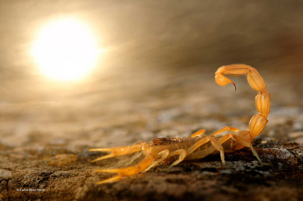 carlos-perez-naval-wildlife-photographer-2014