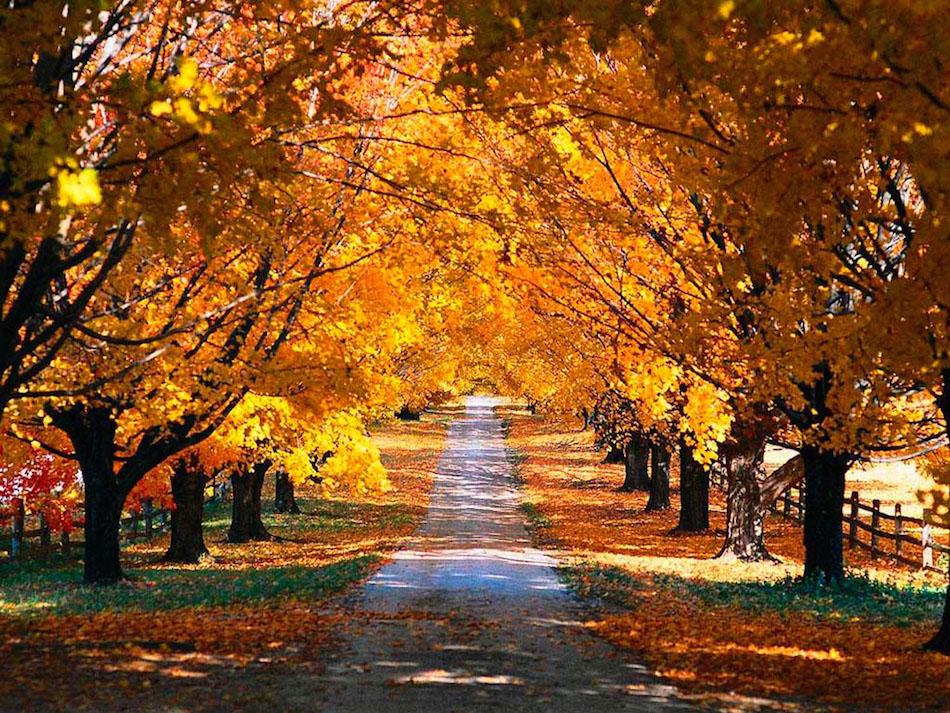 Sonbahar Fotoğrafları Için 50 Mükemmel örnek