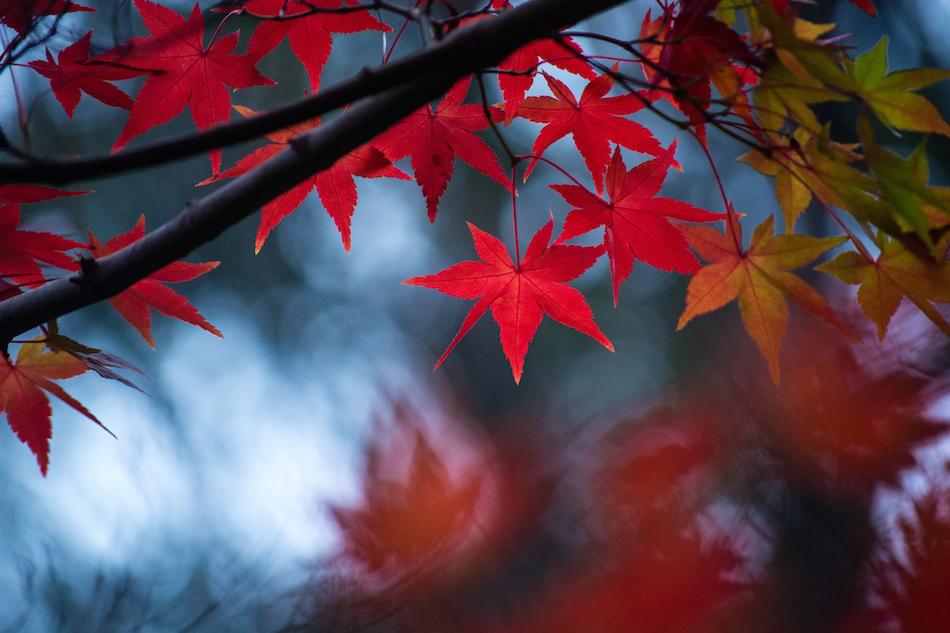 Sonbahar Fotoğrafı Çekmek için 4 Önemli İpucu