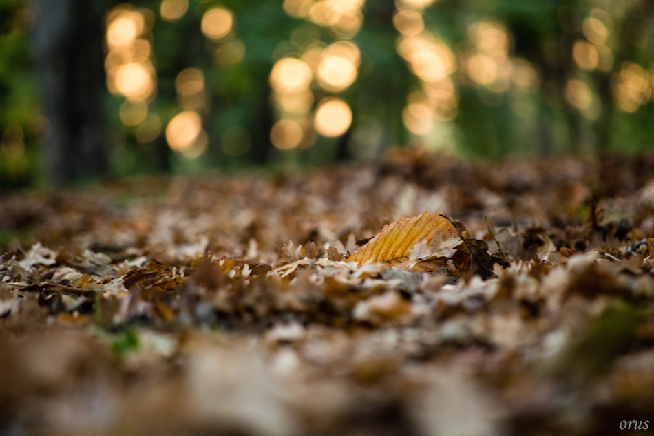 Sonbahar fotoğrafı çekmek 01