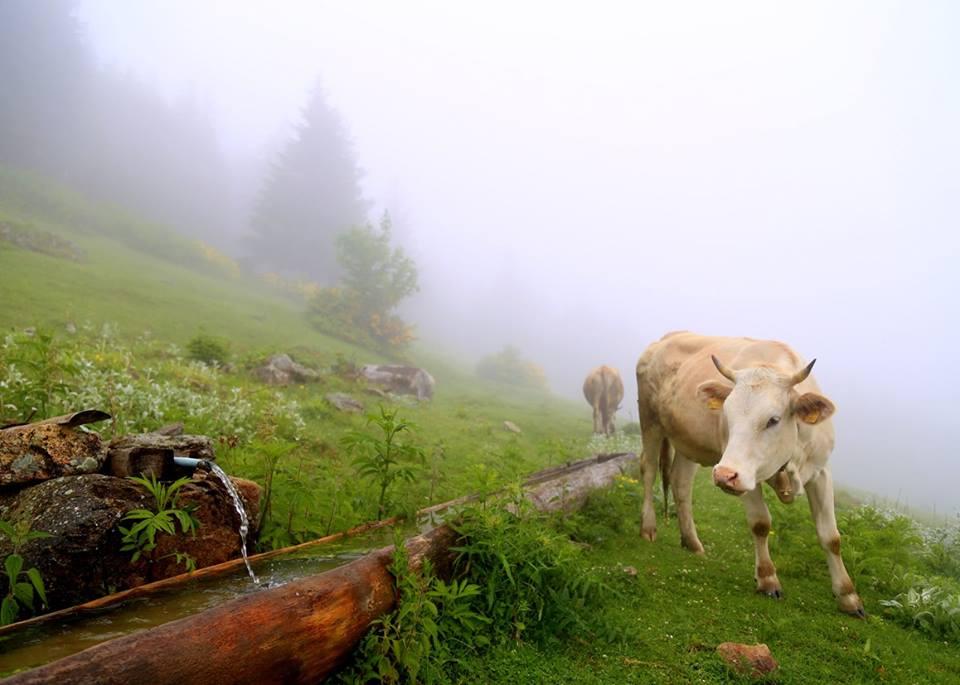 6. Tarım ve İnsan Konulu Ulusal Fotoğraf Yarışması Sonuçlandı
