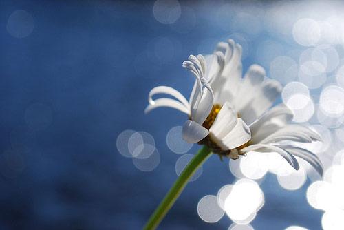 Bokeh Fotoğraflar için Mükemmel Örnekler