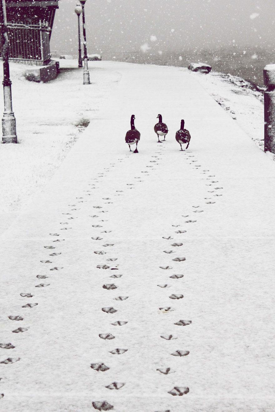 en güzel kış fotoğrafları