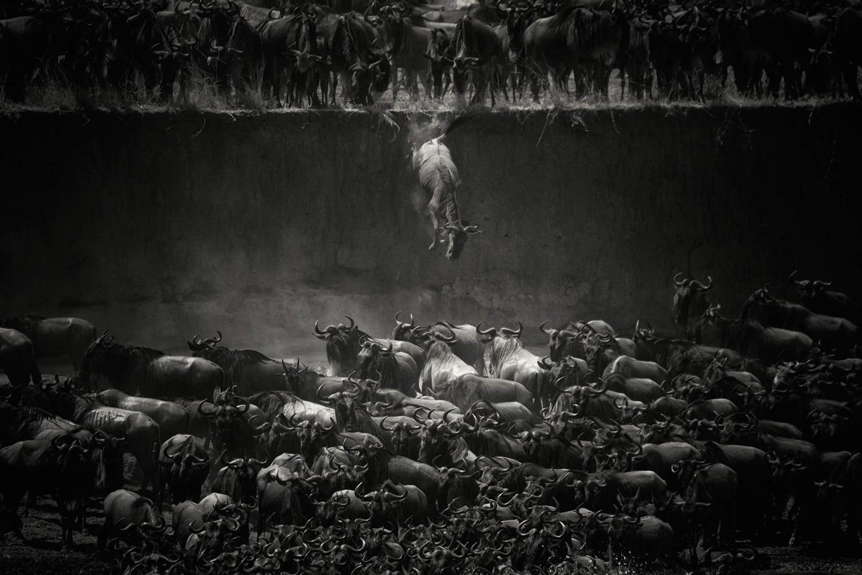 National Geographic Fotoğraf Yarışması 2014 Sonuçları