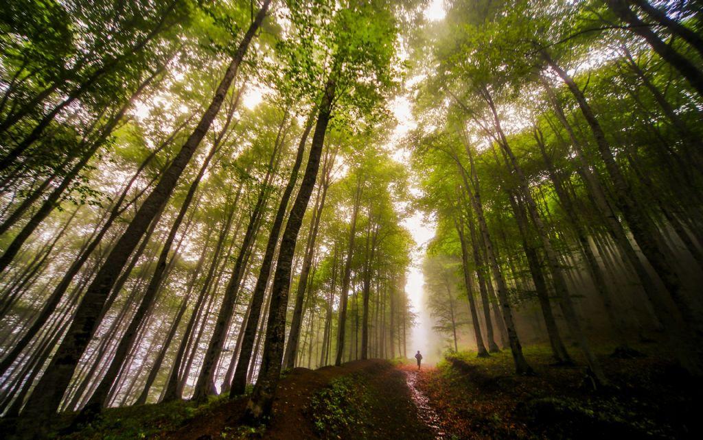 Orman ve İnsan Konulu 2. Ulusal Fotoğraf Yarışması Sonuçlandı 1