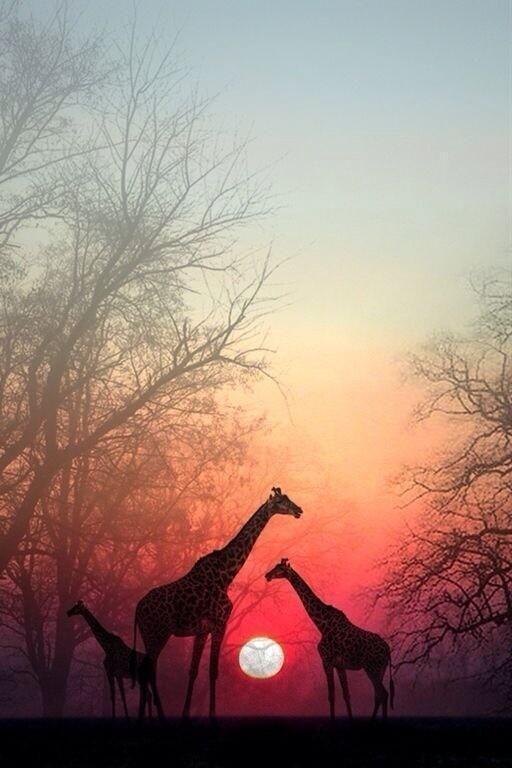 Dünyanın en güzel gün batımı manzaraları