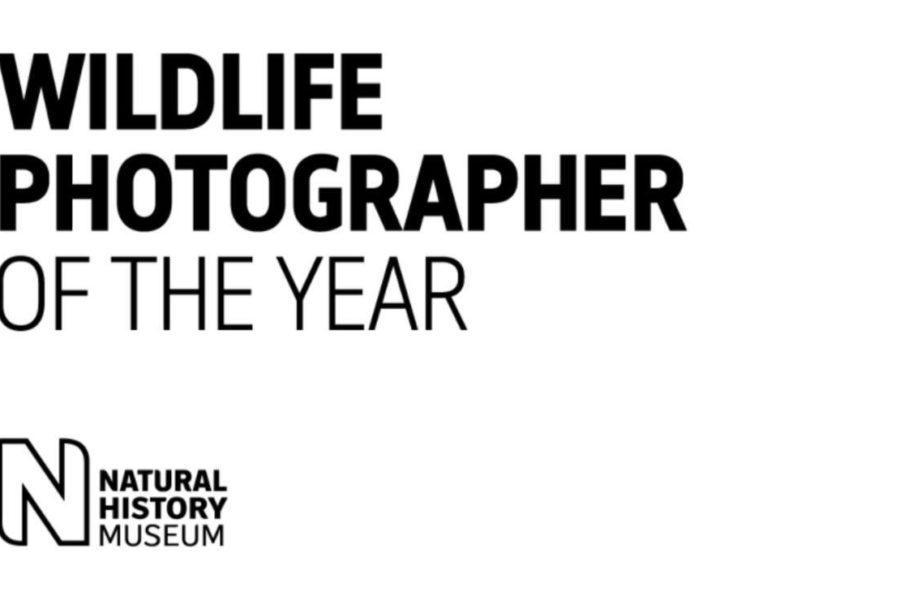 2020 Yılının En İyi Vahşi Yaşam Fotoğrafları