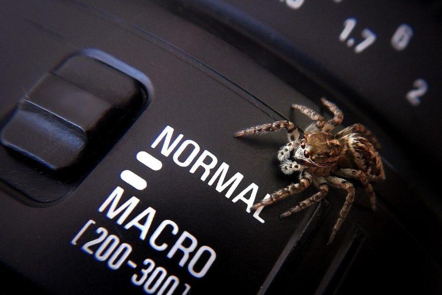 Makro Fotoğrafçılık Nedir? Makro Lens Nasıl Tanımlanır?